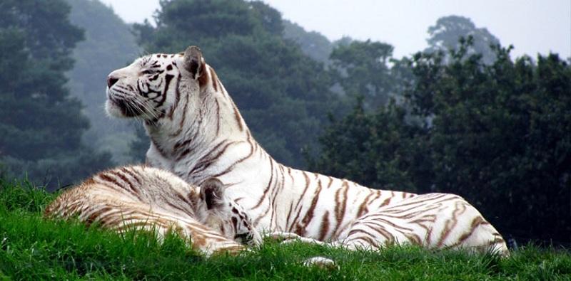 national parks in Tamil Nadu