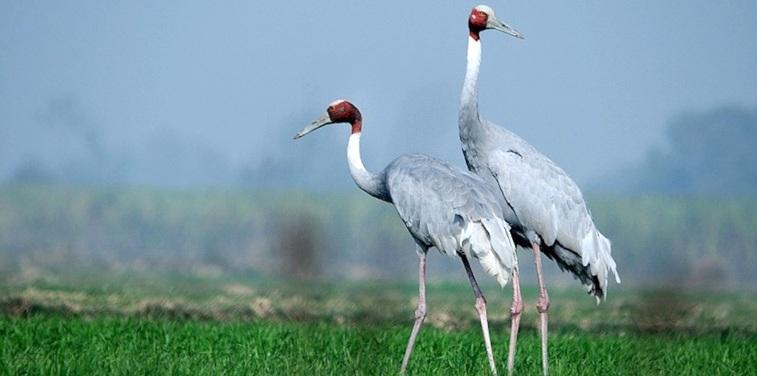 Karikili Bird Sanctuary